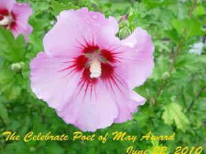 Poet of May